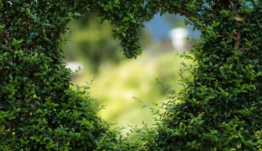 Lei è un amante o un professionista del giardino?